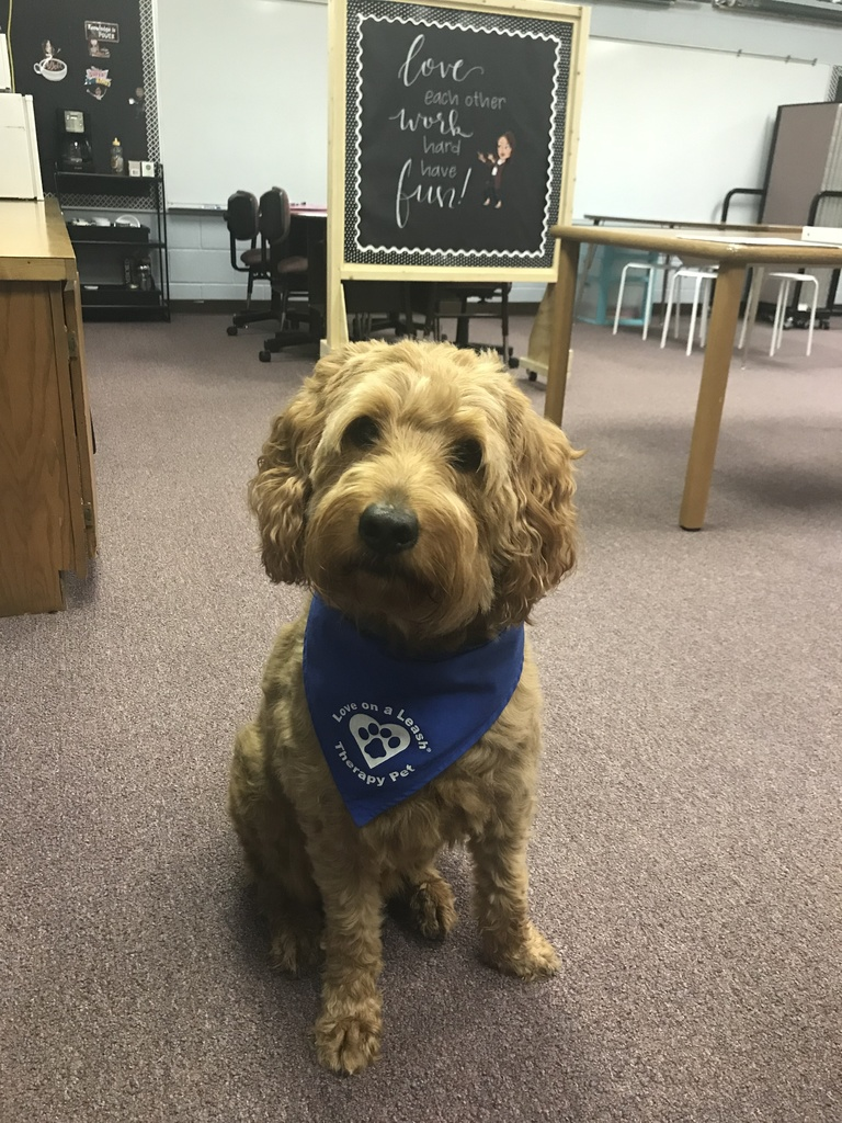 Therapy Dog Murphy